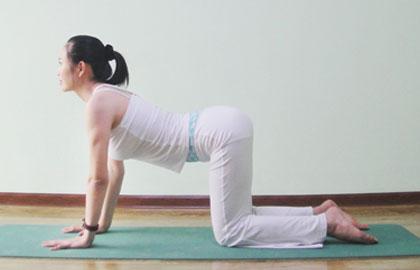 三组动物式瑜伽动作 快速瘦你的手臂