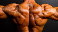 哑铃背部肌肉强化训练-新手(2练/周)