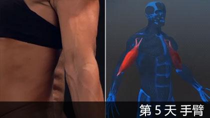【中文字幕】科學健身第5天 - 手臂 | 肌肉構造講解+訓練方法