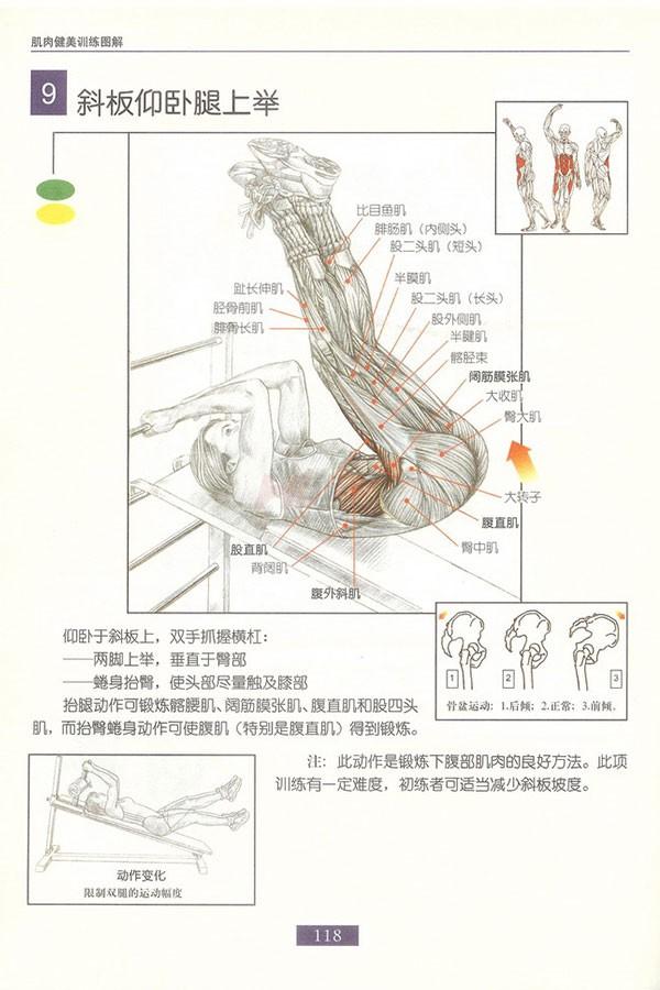 肌肉健美训练图解:腹部肌肉 - 图片10