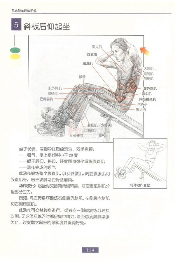 肌肉健美训练图解:腹部肌肉 - 图片6