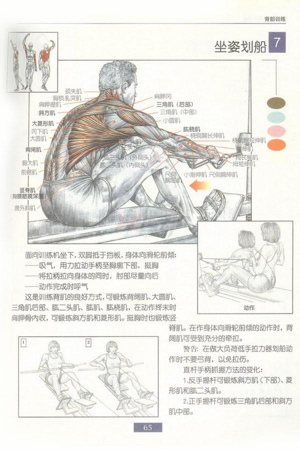 肌肉健美训练图解:背部动作 - 图片8