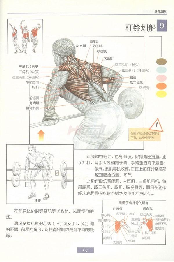 肌肉健美训练图解:背部动作 - 图片10