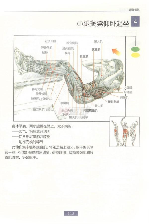 肌肉健美训练图解:腹部肌肉 - 图片5