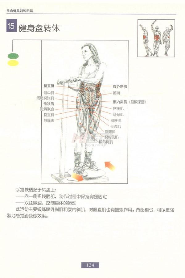 肌肉健美训练图解:腹部肌肉 - 图片15
