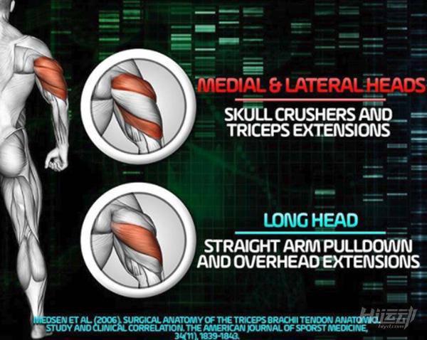 最科学的肱三头肌训练手册,麒麟臂就靠它 - 图片2