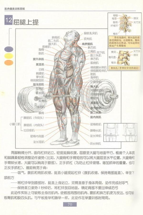 肌肉健美训练图解:背部动作 - 图片13