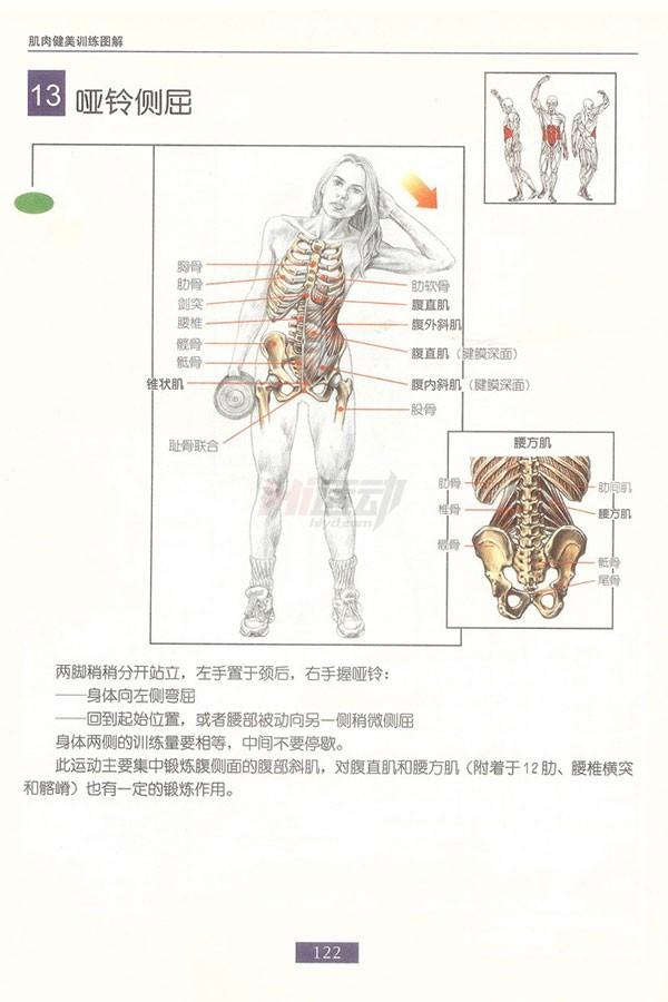 肌肉健美训练图解:腹部肌肉 - 图片13