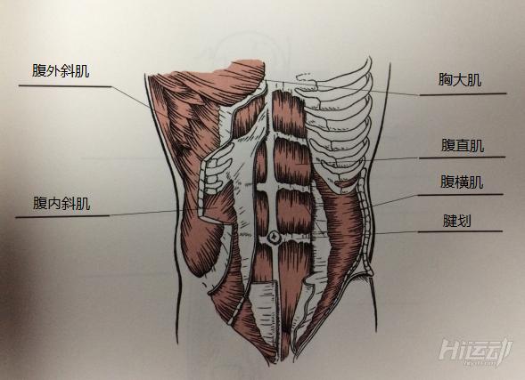 横看成岭侧成峰 科学训练腹肌的方法 - 图片2