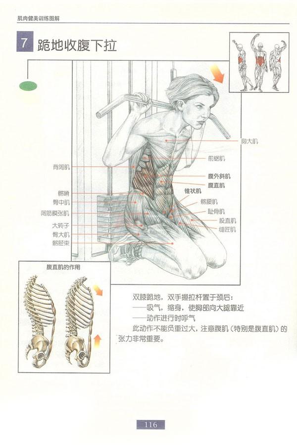 肌肉健美训练图解:腹部肌肉 - 图片8