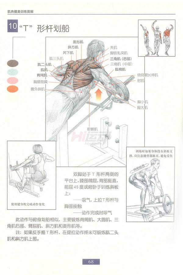 肌肉健美训练图解:背部动作 - 图片11