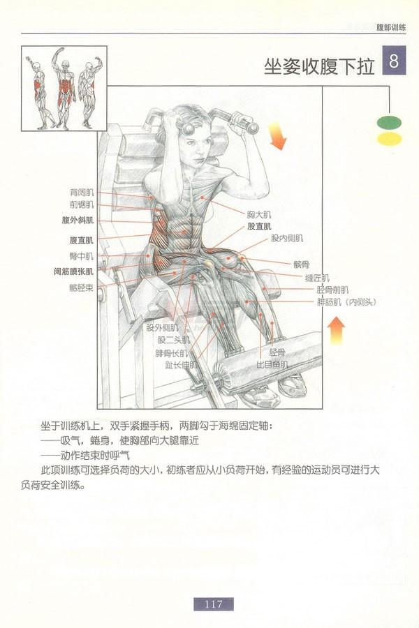 肌肉健美训练图解:腹部肌肉 - 图片9