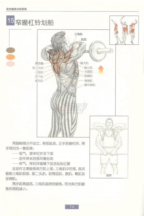 肌肉健美训练图解:背部动作 - 图片17