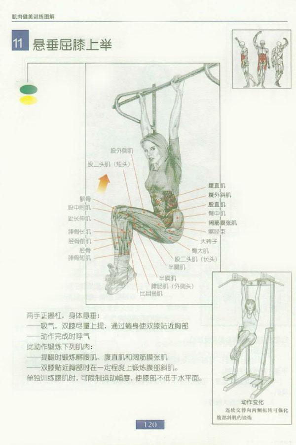 肌肉健美训练图解:腹部肌肉 - 图片11