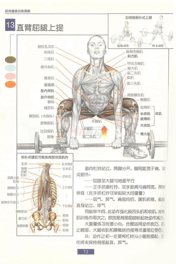 肌肉健美训练图解:背部动作 - 图片15