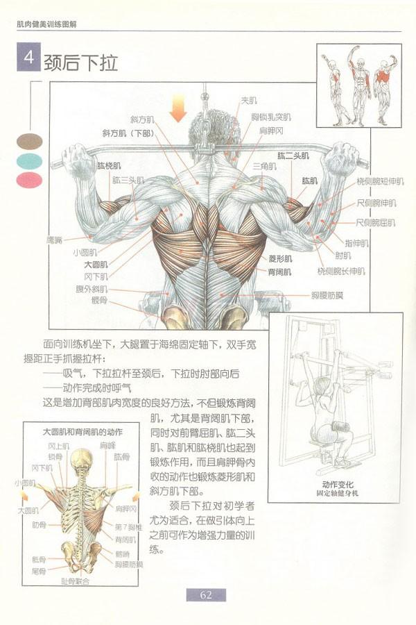 肌肉健美训练图解:背部动作 - 图片5