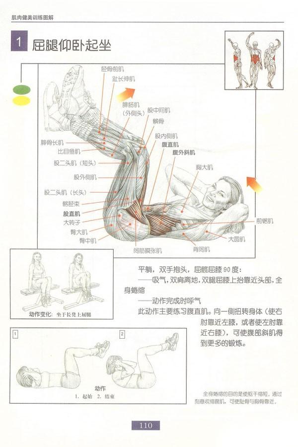 肌肉健美训练图解:腹部肌肉 - 图片2