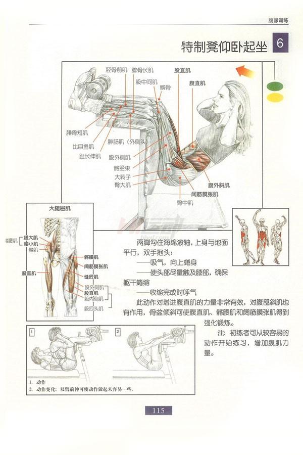 肌肉健美训练图解:腹部肌肉 - 图片7