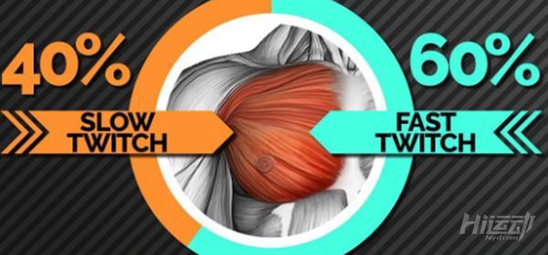 最科学的胸肌分析和训练指南,看完胸肌不长来找我