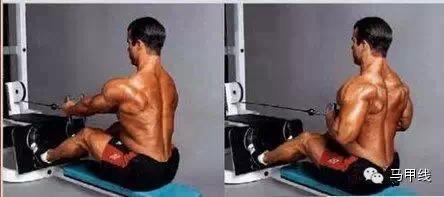 最全面的背部肌肉锻炼