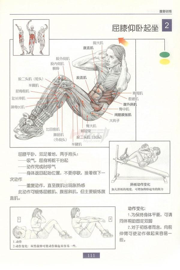肌肉健美训练图解:腹部肌肉 - 图片3