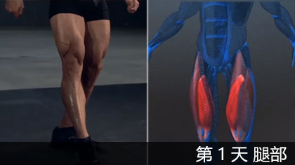 【中文字幕】科学健身第1天 - 腿部 | 肌肉构造讲解+训练方法