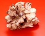 平菇, 又叫侧耳、耳菇、青蘑、北风菌、蚝菌、薄菇、蚝菇