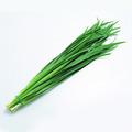 韭菜, 又叫壮阳草、赶阳草、长生草、起阳草