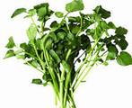 蕹菜, 又叫空心菜、藤藤菜、蕹菜、蓊菜、通心菜、无心菜、瓮菜、空筒菜、竹叶菜