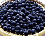 黑豆, 又叫黑大豆、乌豆、橹豆、马料豆、料豆、零乌豆、冬豆子