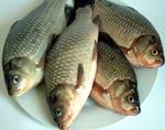 鲫鱼, 又叫河鲫、鲋鱼、喜头、鲫瓜子、喜头鱼、海附鱼、童子鲫、鲭