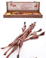 鹿鞭(新西兰马鹿)
