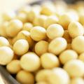 黄豆, 又叫大豆、黄大豆、枝豆、菜用大豆