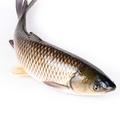 草鱼, 又叫鲩鱼、混子、草鲩、草包鱼、草根鱼、草青、白鲩
