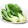 小白菜, 又叫青菜、油白菜、白菜秧